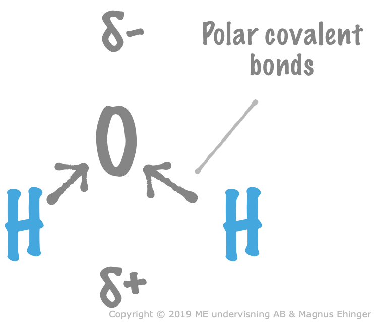 Because of the polar covalent bonds, and the bent structure, water is a dipole.